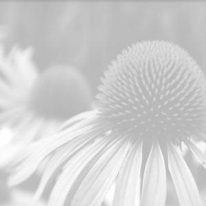 Kwiaty i byliny