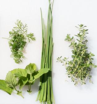 zioła, oleki, hydrolaty ziołowe
