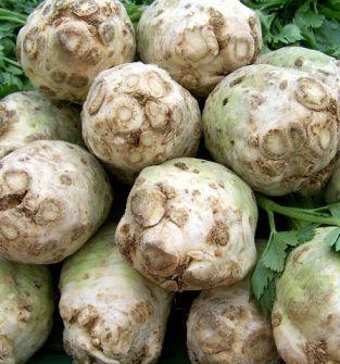 Ogórek, por, seler korzeniowy, fenkuł, ziemniaki, malina, fasola żółta, dynia