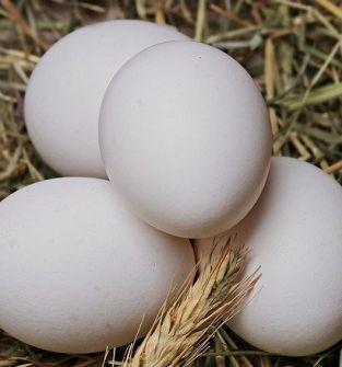 jaja wiejskie - kurze
