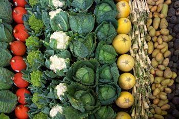 owoce i warzywa ekologiczne