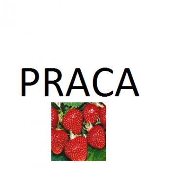 Praca przy zbiorze owoców