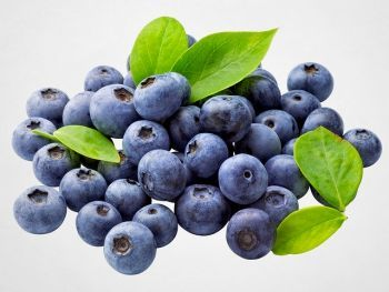 owoce borówki wysokiej