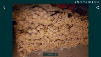 Ziemniaki jadalne wczesne